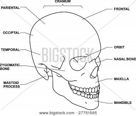 Skull.eps