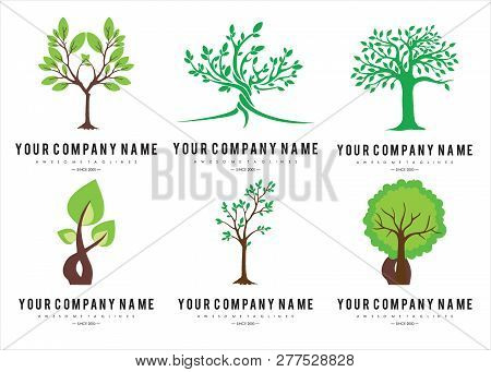Set Green Tree With Leaves Logo . Six Logo Tree Green Isolated On Wgite Background. Herbal Leaf , Ec