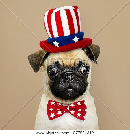 Cute Pug puppy in a Uncle Sam hat and bow tie poster