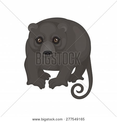 Australian Phalanger. Wild Marsupial Animal With Black Fur And Long Tail. Fauna Theme. Detailed Flat