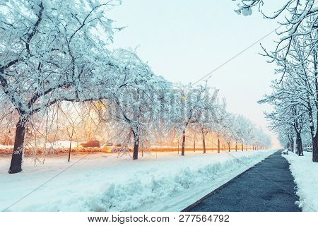 Empty Street Covered In Snow In Evening, Frozen Treetops Lit By The Street Light Lamps