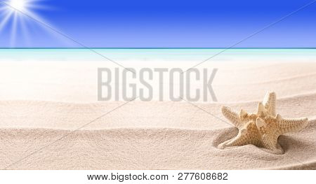 A tropical starfish laying in the beach sand. Sandy texture with sea star fish and copy space. Concept  for summer vacation or exotic holiday. Panorama background