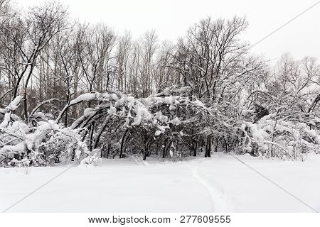 Snow Covered Trees Standing On The Edge Of The Forest
