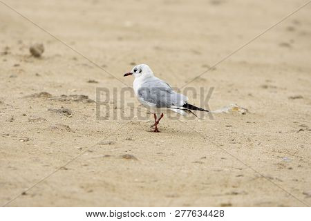 Seagull Bird On Beach At Cloudy Day