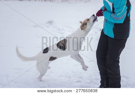 Master Playing With Mixed Breed Dog Trying To Pull Out Rope From The Dog Teeth At Winter Season