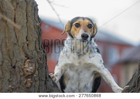 Portrait Of Curious Dog That Looking About In Wide-eyed Astonishment Standing On Tree Branch