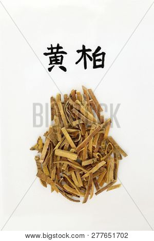 Amur cork tree bark herb used in chinese herbal medicine, anti bacterial, anti microbial & anti inflammatory. On rice paper with calligraphy script, translation reads as amur cork tree. Huang bai.