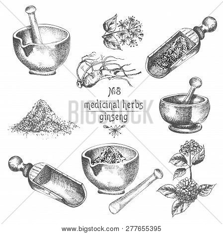 Realistic Botanical Ink Sketch Of Ginseng Root, Flowers, Berries, Bottle, Mortar And Pestle Isolated