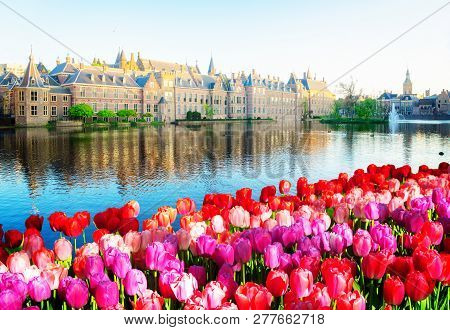 Facade Of Binnenhof - Dutch Parliament With Reflections In Pond, The Hague At Spring With Flowers, H