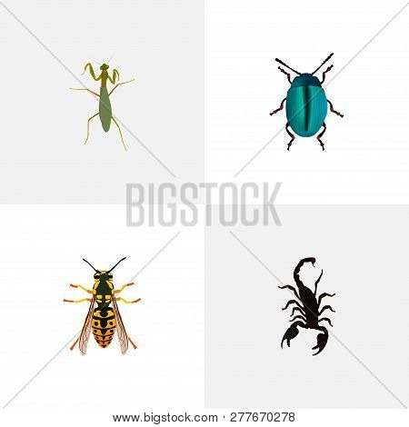 Set Of Insect Realistic Symbols With Sting, Scorpion, Insect And Other Icons For Your Web Mobile App