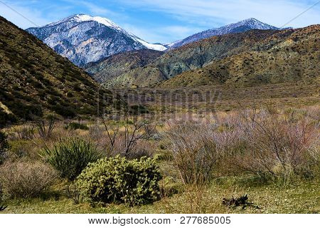 Rural Grasslands Including Chaparral Shrubs And Cactus Plants On An Arid Grassy Plain With Mt San Go