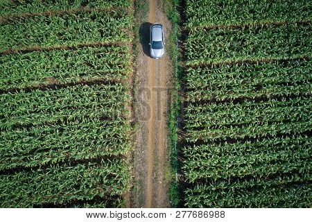Aerial View Of Modern Car On The Road In Green Corn Field. Road Trip In Countryside. Auto Performanc