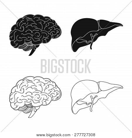Isolated Object Of Body And Human Logo. Set Of Body And Medical Stock Vector Illustration.