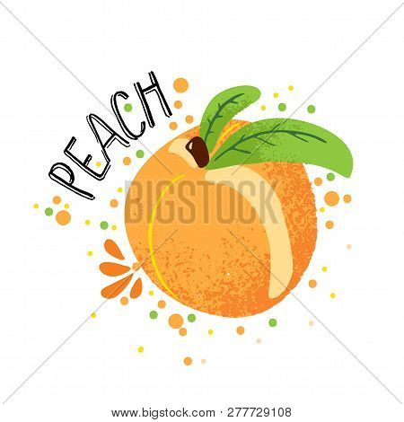 Vector Hand Draw Peach Illustration. Orange Ripe Peaches With Juice Splash Isolated On White Backgro