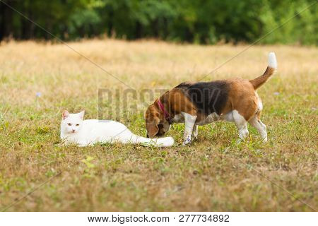 Dog And Cat Playing Together Outdoor In The Summer