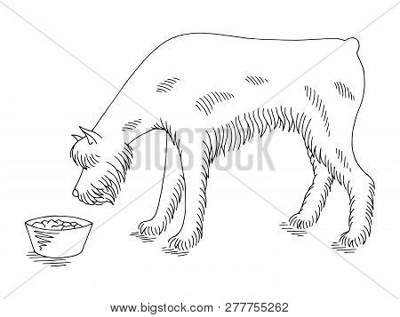 Dog Schnauzer Eating From The Bowl Graphic Black White Sketch Illustration Vector