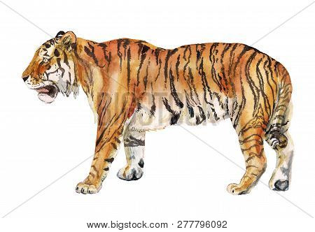 Watercolor Image Of Realistic Tiger On White Background