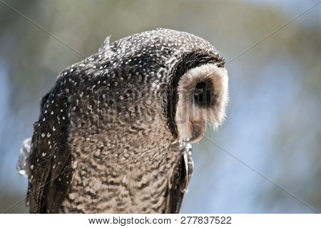 poster of this is a close up of a masked owl