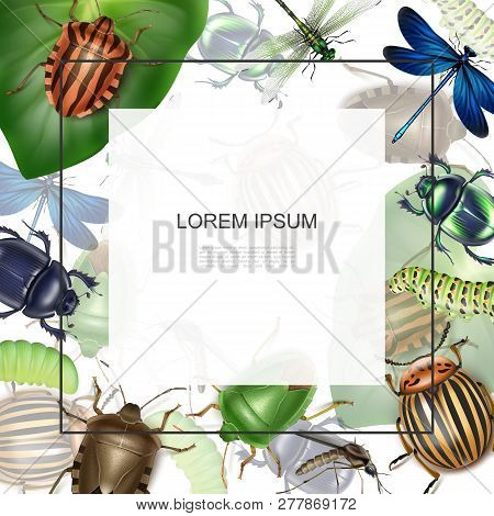 Realistic Macro Insects Template With Frame For Text Dragonflies Mosquito Caterpillars Colorado Pota