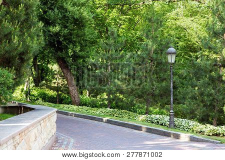 Paved Walkway In A Park With Pine Trees And Green Lawn, Landscape With Plants And A Lamppost With A
