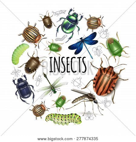 Realistic Insects Round Concept With Caterpillars Dragonflies Gnat Scarab Colorado Potato And Dung B
