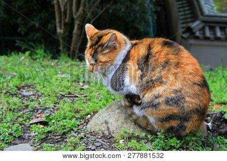 A Street Cat In Kyoto Park At Spring Time
