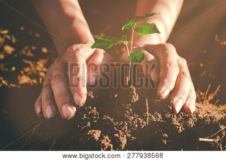 Seedling Growing From Fertile Soil Was Gently Encircled With Hands, Concept Of Environmental Conserv
