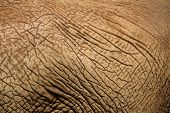 another angle of of an elephant's skin that can be used as a background for many images poster