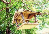 Wooden bird house hanging on the green tree. Seasonal natural scene. Ornithology theme. Detailed natural scene. Retro photo filter. poster