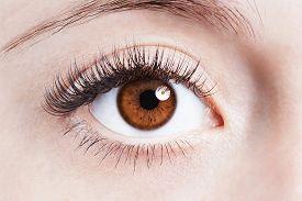 Close Up Image Of Human Female Eye