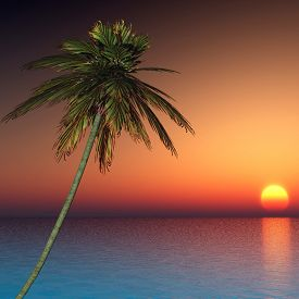 Palm tree at sunset sea - 3D render