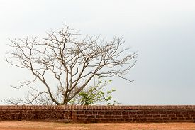 A Tree Behind A Laterite Wall Set Against The Sky