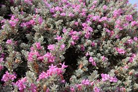 Many Pink Flowers As A Floral Natural Background