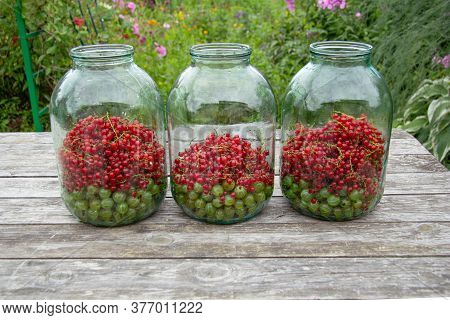 Three Large Three-litre Jars Stand On A Wooden Table. In The Jars Are Gooseberries And Currants That
