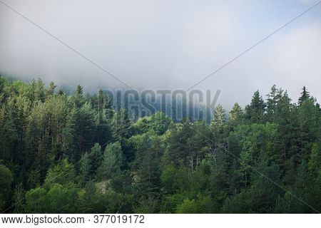 Mountain View With Evergreen Trees In Fog.