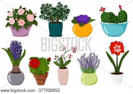 Potted Flowers Set. Isolated Blooming Potted Plant With Leaves In Pot Icons. Cactus, Violet, Hyacint