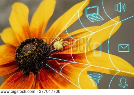 A Bright Spider On A Yellow Flower Weaves A Web. The Concept Of Abstaining From Gadgets And Digital