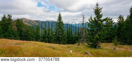 Spruce Forest On The Hillside Meadow. Colorful Grass In Autumn. Hills Rolling In To The Distance. Cl