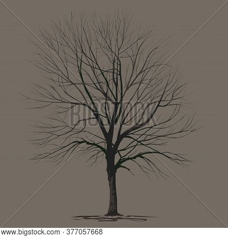 Ash-tree (fraxinus L.) With Fallen Foliage, In Winter, A Color Vector Image On A Brown Background