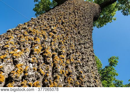 Close-up Of Green Moss On A Tree Trunk. Tree Trunk In Perspective. Bark Texture.