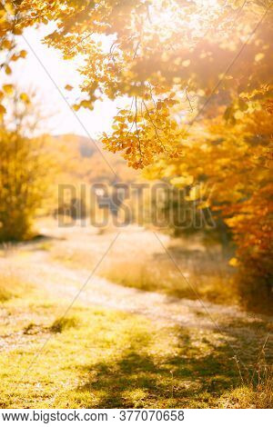 Autumn Background Of Yellow Foliage In The Forest And Sunny Glare.