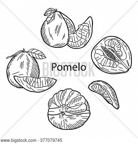 A Set Of Whole Pomelo, Cut Pomelo, Halves, Wedges And Leaf.