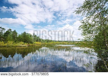 Wetland Landscape With Colorful Trees And Plants In The Summer