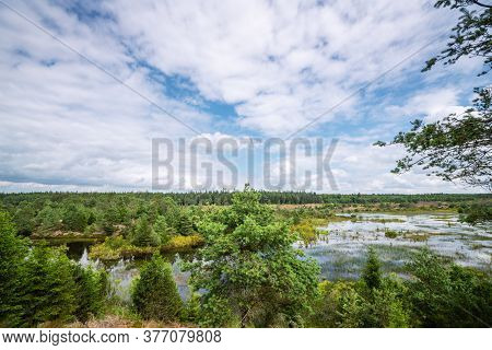 Landscape Scenery In The Wetlands With Green Trees In The Summertime