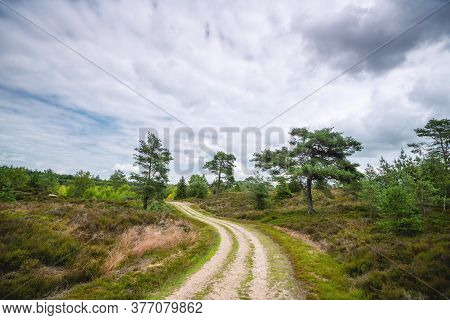Dirt Road In A Wilderness Landscape In Cloudy Weather With Trees On The Roadside