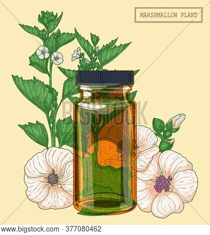 Medicinal Marshmallow Flowers And Brown Glass Vial, Hand Drawn Botanical Illustration In A Trendy Mo