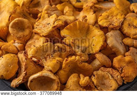 Close-up Of Raw Fresh Chanterelle Mushrooms. The Concept Of A Food Background. Horizontal Orientatio