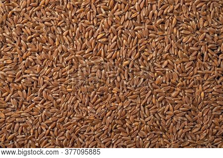 Close Up Wheat, Rye And Barley Grain Food Background. Harvest Concept. Horizontal Orientation