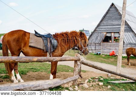A Brown Horse In A Paddock Near A Wooden House.