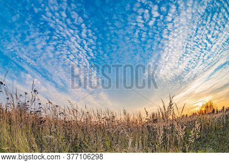 Prairie Landscape With Grasses, Meadows, Trees And A Bright Blue Sky With White Clouds.tall Grass An